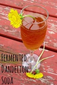 From: http://myjournalkohn.blogspot.ca/2011/06/fermented-dandelion-soda.html