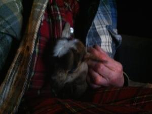 Cuddling goat style.