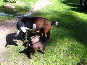 Athena and babies.